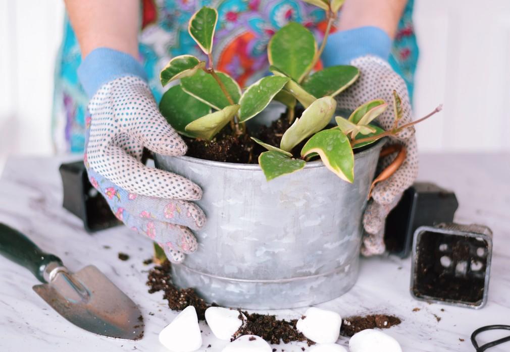 Préparation plante